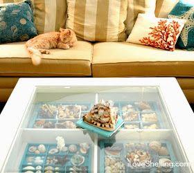 seashell display coffee table                                                                                                                                                                                 More