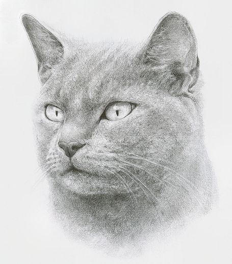 Pencil drawing of a cat by this amazing artist, Katrina Ann