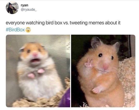 Bird Box Meme birdbox Bird Box Movie Memes Memes funny