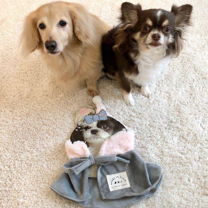 愛犬のお散歩に 巻くだけ簡単 スリコのペット用ケープ 体験レポ いぬのきもちweb Magazine ペット 大きい犬 いぬ