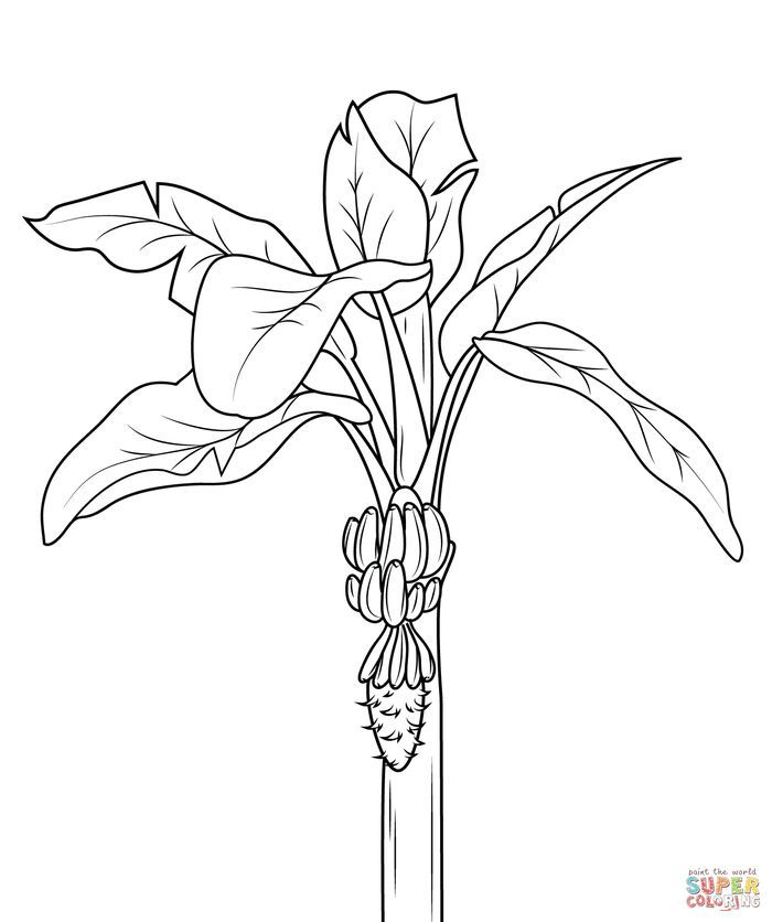Banana Coloring Pages In 2020 Tree Coloring Page Pumpkin