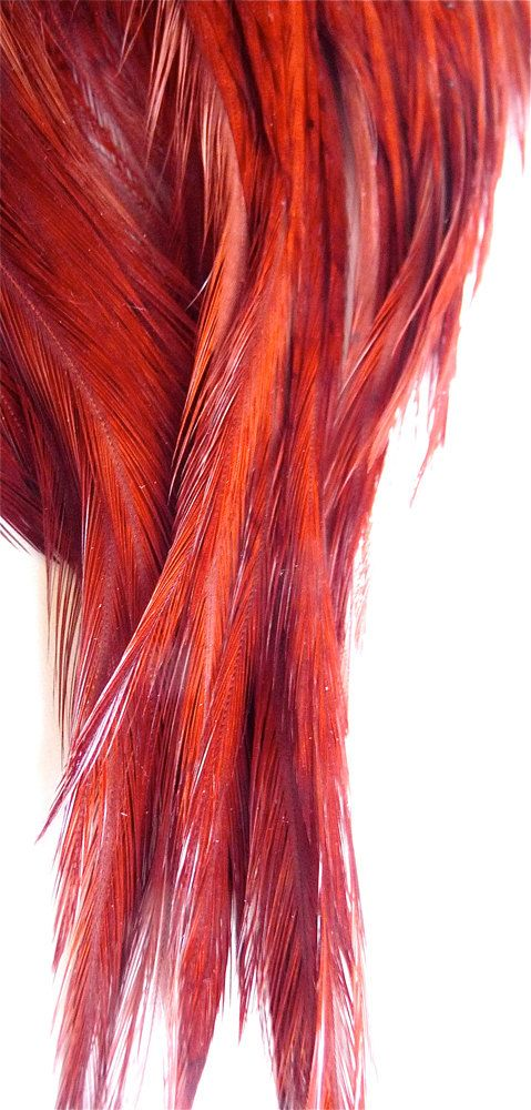 34 best feather hair extensions images on pinterest feather hair phoenix rising feather hair extensions hot pmusecretfo Gallery