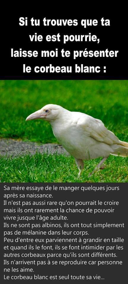 Les 25 meilleures id es de la cat gorie le corbeau sur for Jean d ormesson si tu savais najat