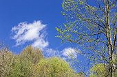 awakening nature in spring time over clear sky