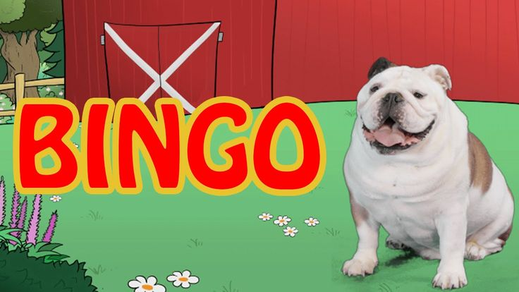 BINGO  | Video Nursery Rhymes for Kids  | Cute  Animals