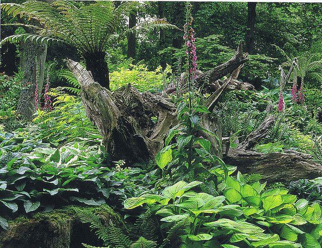stumpery garden pictures | ... Collection Galleries World Map App Garden Camera Finder Flickr Blog