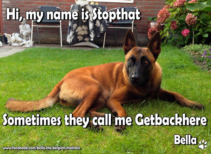 Hi, my name is Stopthat, sometimes they call me Getbackher