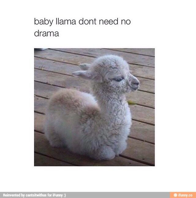 Dont Feed The Drama Llama 17 Best images about M...