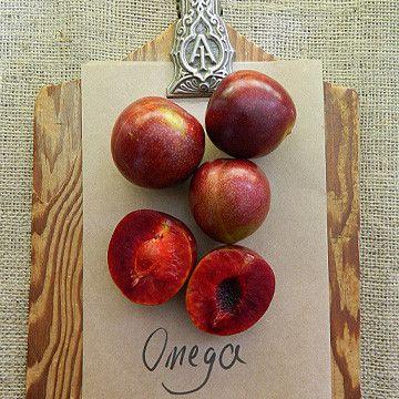 Plum Omega