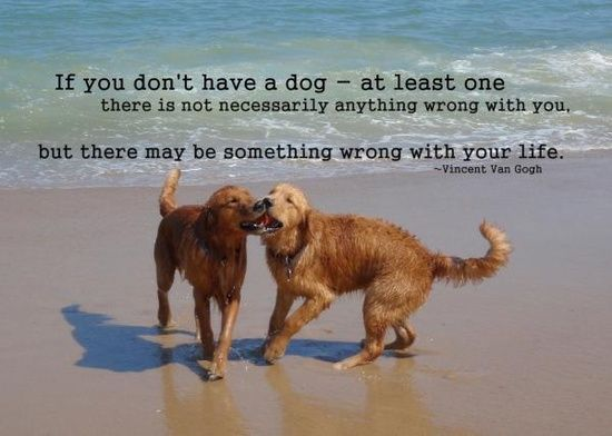 Dog #Quote = Truth❤❤❤❤❤❤ #dog