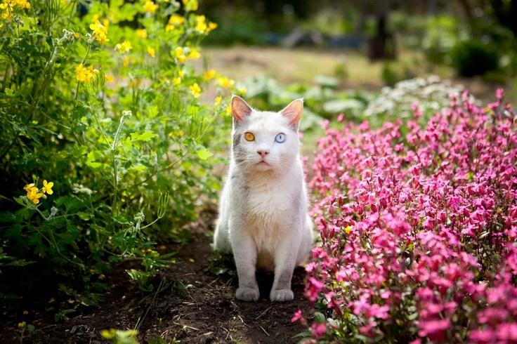 Spring around the corner for Fukumaru.