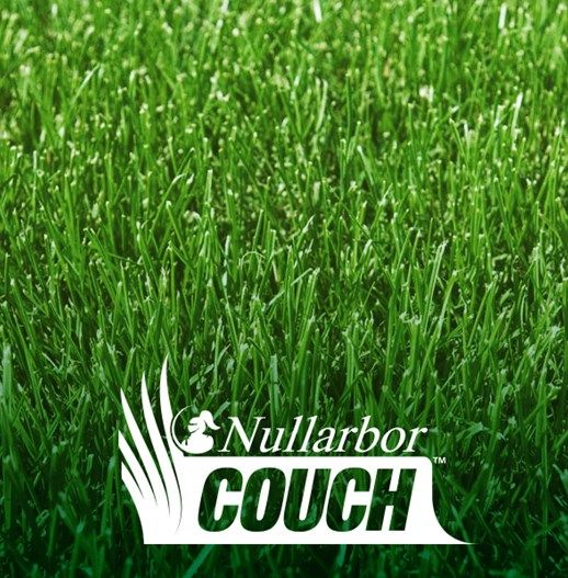 Nullarbor Couch | Lilydale Instant Turf | Love your lawn | Great grass | Lily & Dale | Follow us | Garden Tips & Advice | Contact us | Lawn Solutions Australia