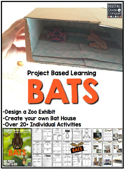 Project Based Learning with Bats!  Research, design a zoo exhibit, and build a bat house! Echolocate this now! $