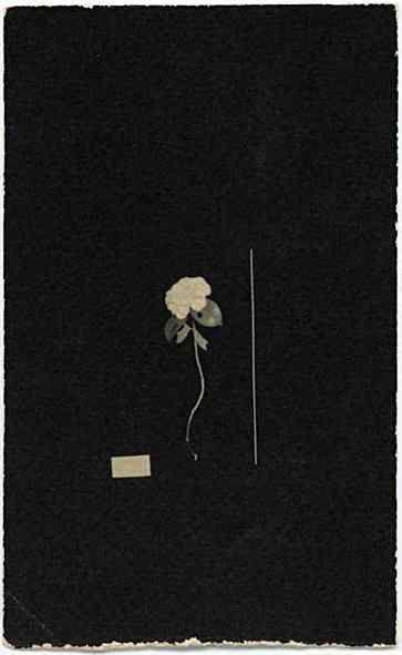 Yamamoto - http://www.hackelbury.co.uk/artists/yamamoto/image_library/image_library-Pages/Image514.html#