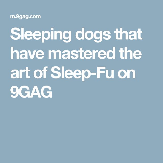 Sleeping dogs that have mastered the art of Sleep-Fu on 9GAG