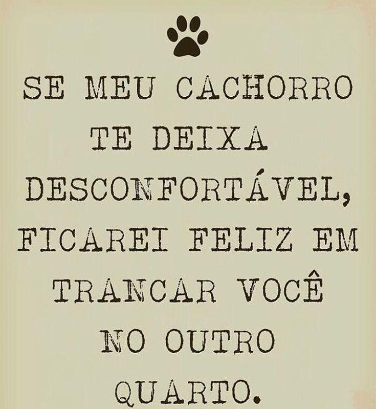 BEM ASSIM! ❤❤ #filhode4patas #maedecachorro #paidecachorro #petmeupet #caopanheiro #cachorros #cachorro #shihtzu #pug #maltes #schnauzer #goldenretriever #labrador #bulldogfrances #viralata #luludapomerania #petmeupet