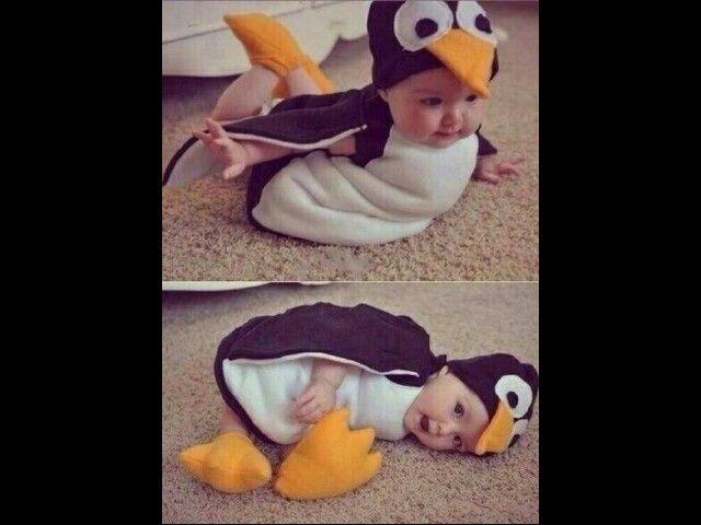 Un pingüino bebe♡
