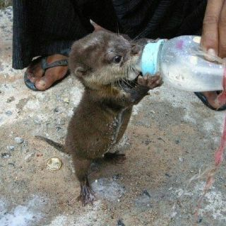 Baby otter...unbelievably cute