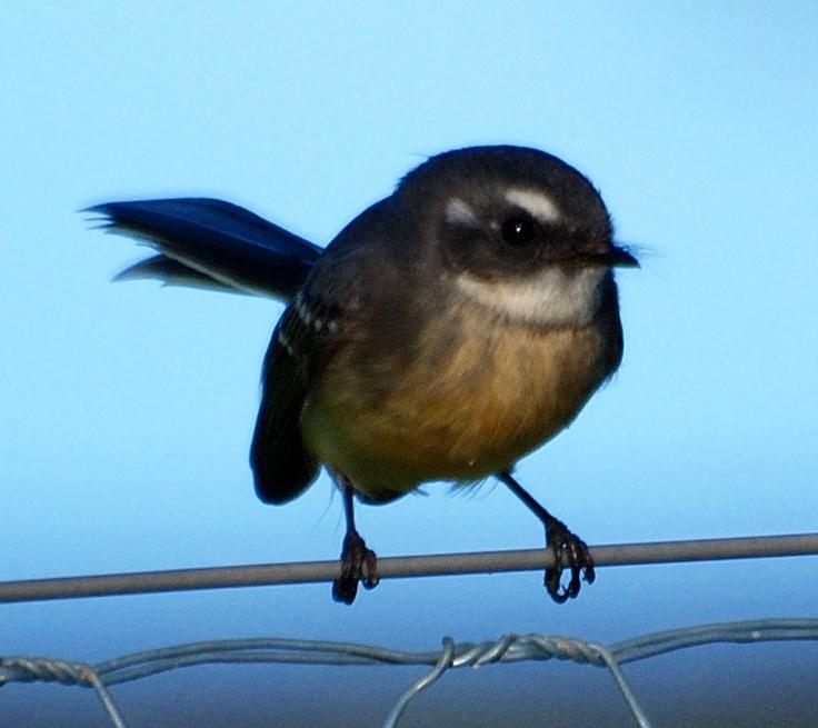 Albany bird