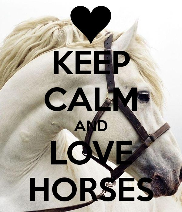 """Click visit site and Check out Hot I love my Horses Shirts. This website is top-notch. Tip: You can search """"your first name"""" or """"your favorite shirts"""" at search bar on the top. #Abyssinian #Cat"""