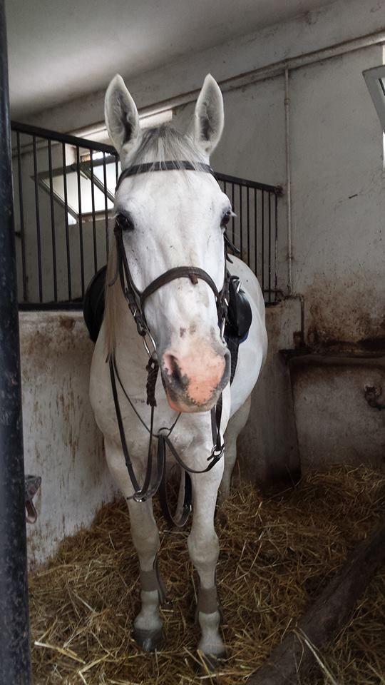 My Horse Maestro