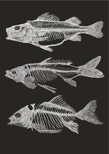 Fisch-Skelette – Vektorgrafik
