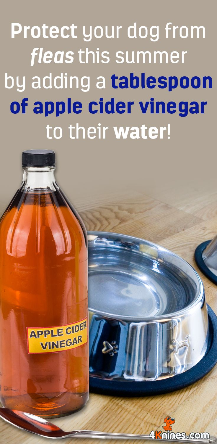 Apple cider vinegar is a natural flea repellent that can be ingested or sprayed topically. Just add 1 tablespoon of apple cider vinegar to your dog's water bowl, or mix it into their food. You can also dilute the vinegar in water and spray it on your dog's coat.