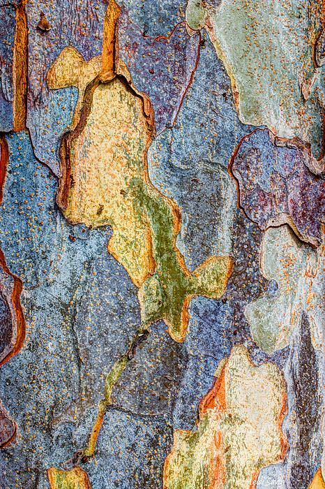 Elm Tree Bark by Heidi Smith