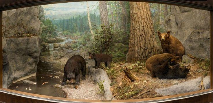 Longmont Natural Science Museum