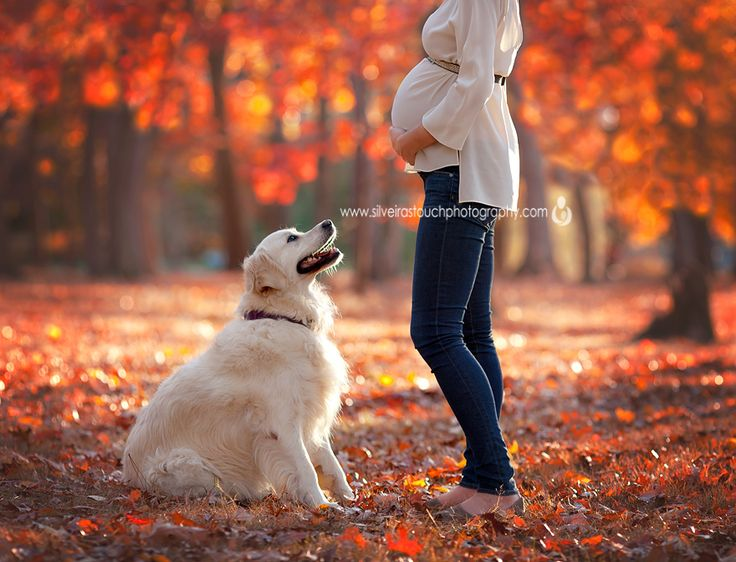 Love this maternity photo with the dog!Photographer » Silveira's Touch Photography