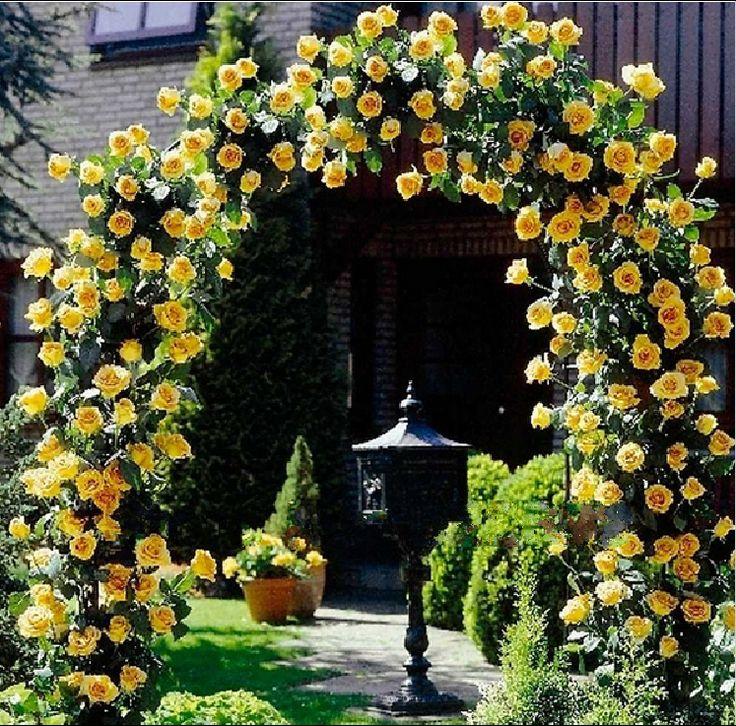 1000 ideias sobre Rosas Trepadeiras no Pinterest  Rosas, Jardinagem
