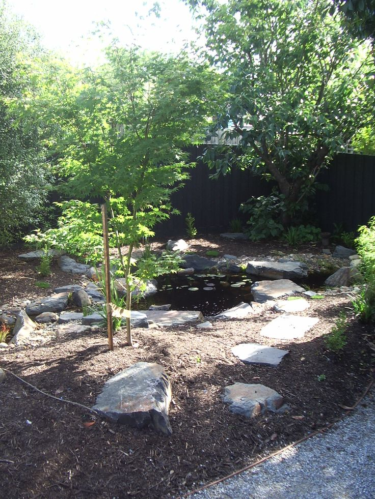 Stepping stones going past the Japanese Maple, leading to the natural pond. Taken before dichondra had filled in.