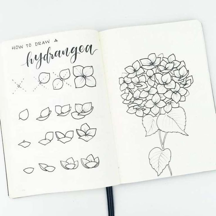 Flower Doodles Are Beautiful And Add Creative Flaire To Literally Any Bullet Journal Thankfully My Frie Flower Drawing Tutorials Flower Drawing Flower Doodles