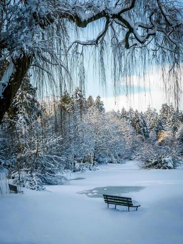 A beautiful winter day with fresh snowfall on Lost Lagoon in Stanley Park, Vancouver, BC
