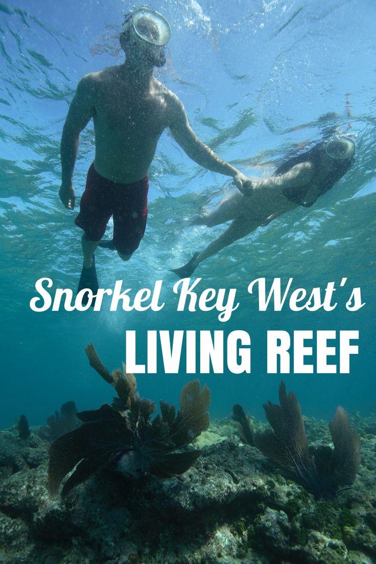 Snorkel Key West's living reef with Fury Water Adventures #keywest #snorkeling #furykeywest