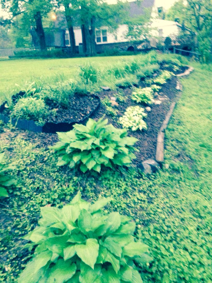 A landscape bed created to avoid mowing a short steep incline in the yard.