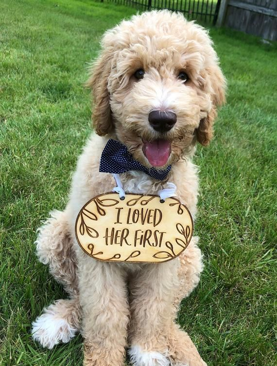 I Loved Her First Cute Dog Sign Dog Sign Wedding Sign Etsy Dog Signs Cute Dogs Breeds Cute Dogs