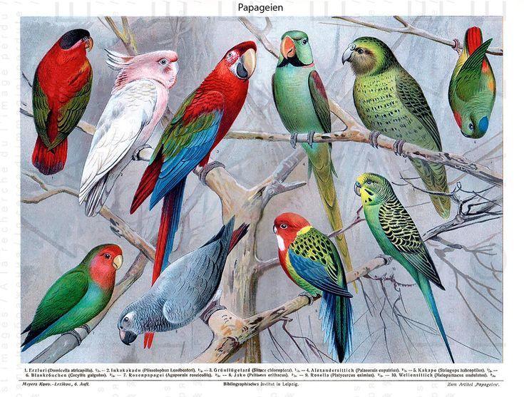 Fab Tropical Birds Ara Papageien Kakadu Vintage Worterbuch
