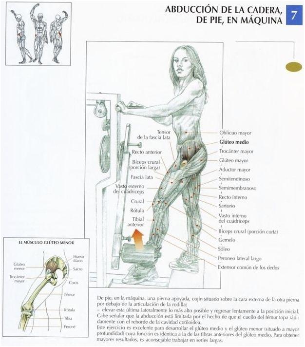 1-GLUTEOS CON MANCUERNAS Este ejercicio trabaja principalmente los cuádriceps y los glúteos . Observación: es inútil trabajar con cargas pesadas: el trabajo con cargas moderadas, en series de 10 a 15 repeticiones dan mejores resultados. 2-EXTENSION DE...