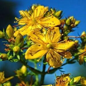 Η ΛΙΣΤΑ ΜΟΥ: Οι δράσεις των βοτάνων: Επουλωτικά βότανα