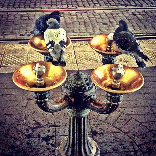 23 Best Bird Bath Fountains Images On Pinterest