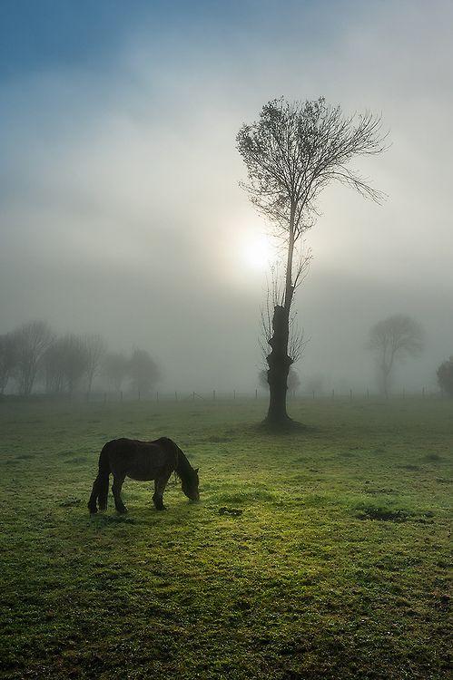 El caballo pardo (by  Toño)