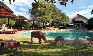 Groupon - Bela-Bela: Two-Night Weekend or Weekday Semi Self-Catering Stay for Two at Mabalingwe Nature Reserve in Bela-Bela. Groupon deal price: R 849