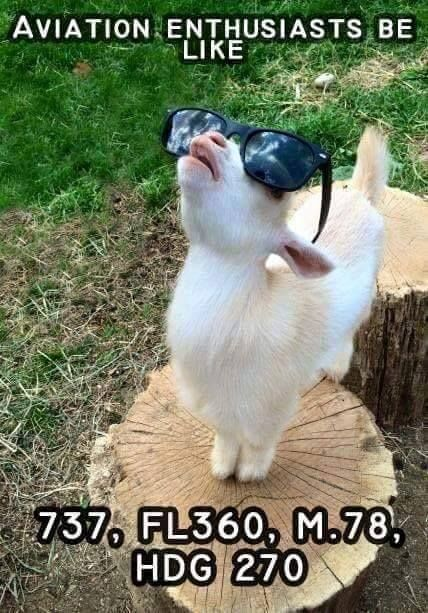 #aviation #goat