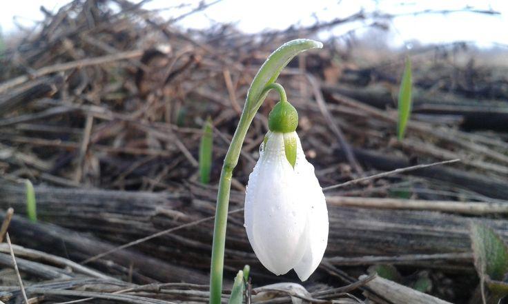 Wiosenne dzień dobry z Tymawy :) Zapraszamy do nas na weekendowy wypoczynek wszystkich sympatyków Mazur i przyrody :)