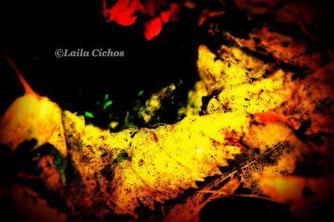 Golden foliage (scheduled via http://www.tailwindapp.com?utm_source=pinterest&utm_medium=twpin&utm_content=post165510475&utm_campaign=scheduler_attribution)