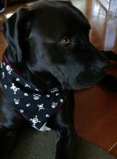 Handsome boy. Diggy bandana