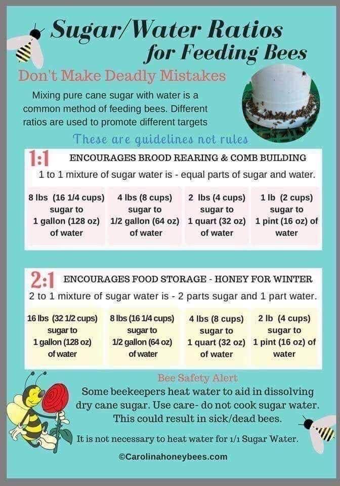 Pin By Debra Elliott On Beekeeping In 2020 Water For Bees Feeding Bees Sugar Water For Bees