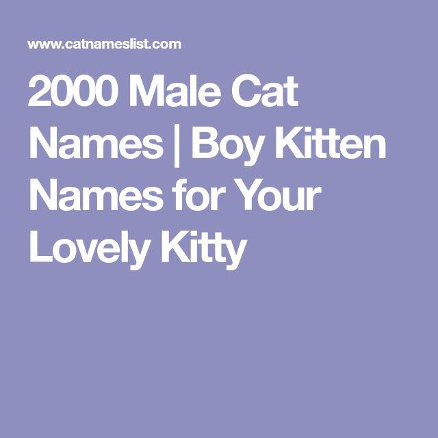 2000 Male Cat Names | Boy Kitten Names for Your Lovely Kitty