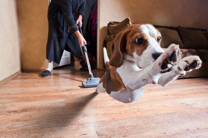 #CleanIngredients Neonato in arrivo: cosa fare con il cane e il gatto #dogs #cats
